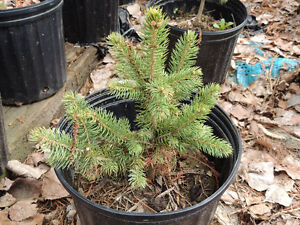 Various Tree Types for Sale