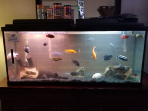 55 gallon fish aquarium comes w/everything even fish $325