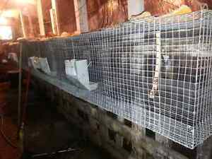 Rabbit wire cages, nestboxes,feeders