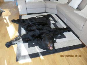 peau d 39 ours acheter et vendre dans qu bec petites annonces class es de kijiji. Black Bedroom Furniture Sets. Home Design Ideas