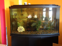 Two fish tanks, fish, stand - make an offer