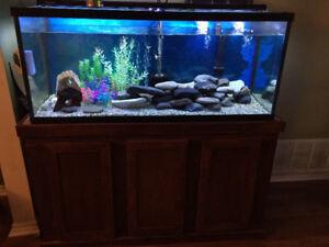 75 Gallon Aquarium Including Accessories
