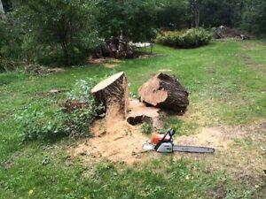Tree Removal >Tree Triming, Pruning,Stump Removal Kitchener / Waterloo Kitchener Area image 6