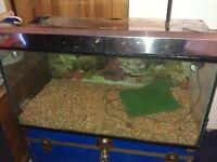 reptile/fish tank XL