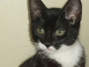 Kittens LOOKING for their FOREVER HOMES!