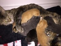 10 kittens looking for a forever home!
