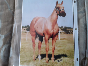Registered quarter horse palomino mare