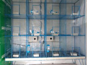 Special Bird Cage