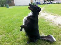 The Loyal Canine: Private Behavioral and Obedience Training.