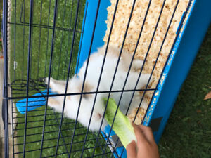 Adorable fluffy bunny and cage