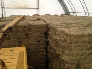 High quality Timothy square bales for sale