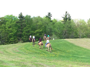 Horseback Trail Ride - Riding lessons available