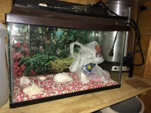 Fish tank with cover and filter