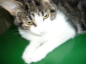 Patsy Cline is Available for Adoption!