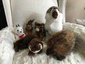 Northern animal collection