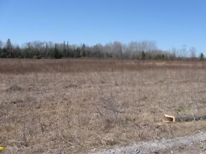 Land for Rent, Plant your Crop.  Best Offer, Help Pay our Tax's Peterborough Peterborough Area image 3