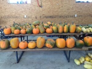 End of season pumpkin sale $1/ pumpkin