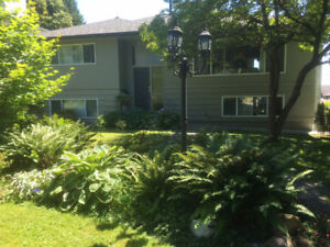 Central Lonsdale location, 5Br House,Large Backyard