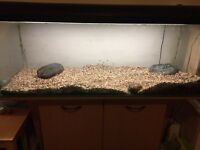 4ft Fish Tank with filter and heater