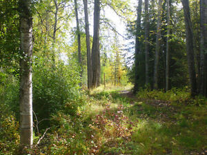 Private home,garden and mature trees one km from downtown