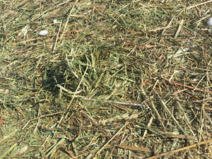 Hay 3x4x7 square bales for sale