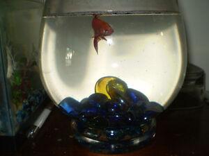 betta fish bowl
