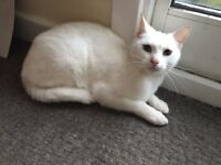 2. Cats 2 yrs old need a new home