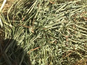 PREMIUM ORGANIC Bundled Small Square Oat Bales