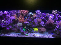 90 gallon coral saltwater reef tank trade for ???