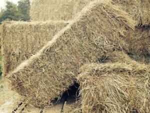 Hay For Sale!