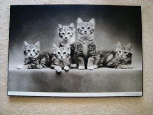 Mounted picture of kittens