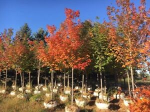 **FALL SALE** TREES , SHRUBS , TREE PLANTING , LANDSCAPING