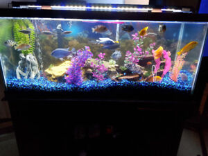 Large variety of tropical fish. Come from breeders and not store