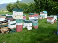 Pollination Services spring of 2016