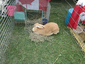 Mobile Petting Zoo for Birthdays/Seniors homes/Special events Peterborough Peterborough Area image 8