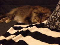 Super relaxed and well behaved cat for your home through WHARF