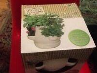 New pots of kitchen plants
