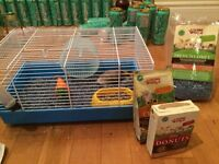 *SUPER CUTE!* Grey male Dwarf Hamster with everything incl!