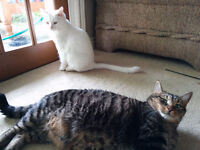 Two kitties available for adoption. One or both