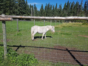 Cookies 3 year old pony