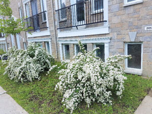 Condo 2016 ~1160Sf 2bdr 2bth Jacuzzi 4plx 2008 5min from Downtow