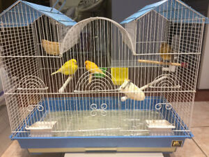2 Female Canaries with Big Cage