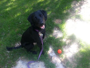 Professional Pet sitting/House sitting Offered