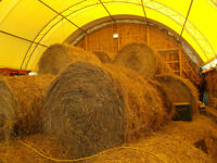 Hay for sale stored indoors   4x4 hard core