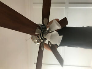 "Hampton Bay- 52"" Ceiling fans x 5"