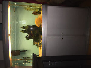 Complet Fisth Tank and Fish