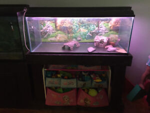 Fish tanks and fish for sale