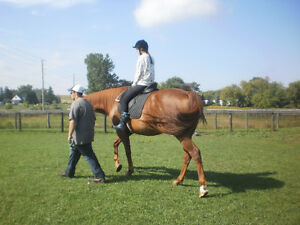 Horse riding for kids 4+yrs - Every weekend!! London Ontario image 3
