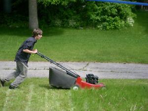 ECONOMY GRASS CUTTING