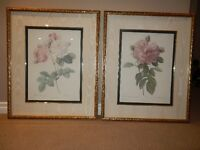 Rose Prints from Bombay Company